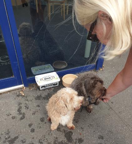 Dog Treats at Lodge Brothers New Malden Branch